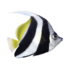 Great Barrier Reef Logo
