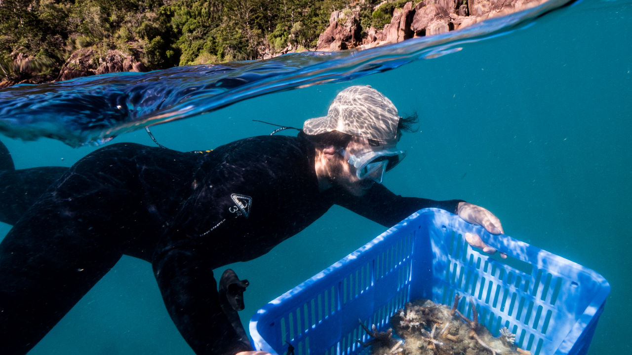 $2.4m for Reef-saving projects in the Whitsundays