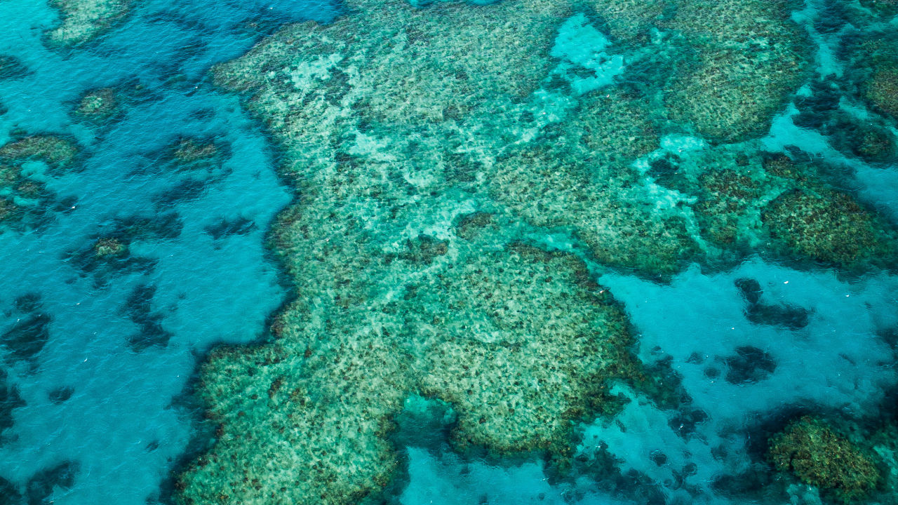 Cyclone Gretel reduces sea temperatures on Great Barrier Reef