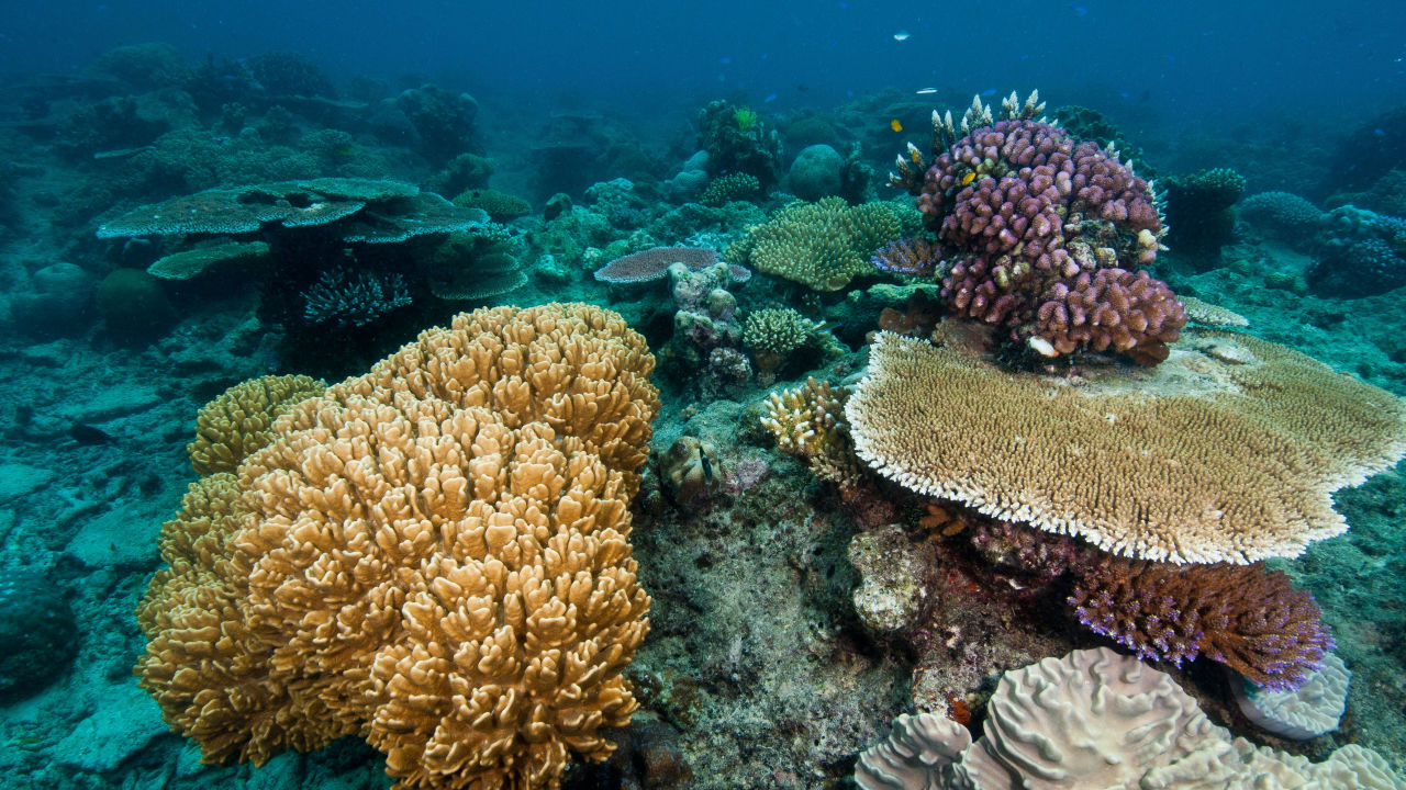Coral DNA first a giant leap in search for super coral secrets