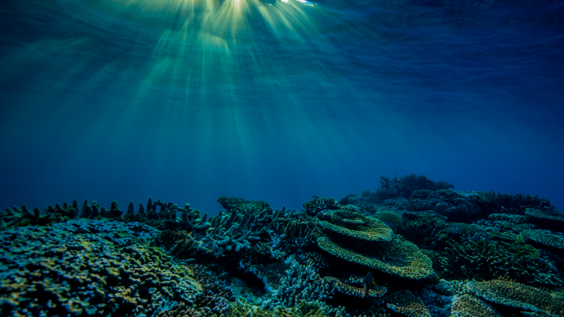During the International Year of the Reef in 2018, the Australian Government announced the largest ever single investment in reef protection.
