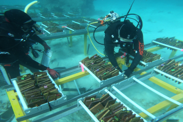 Next generation corals undergo first field tests on the Great Barrier Reef
