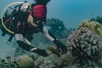 Reef partnership to plant 100,000 corals off Cairns & Port Douglas