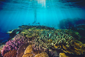 Reef Trust Partnership: Reef protection through Traditional Owners
