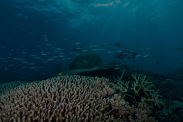 Statement on Great Barrier Reef bleaching