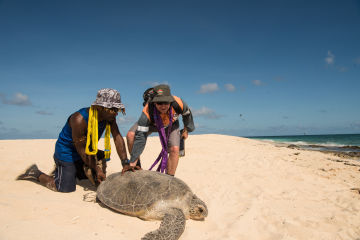 Turtles tracked on Raine Island to further protect species