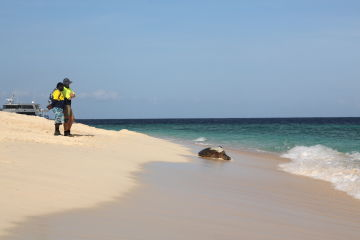 ​Trackers reveal the secret lives of Raine Island's turtles
