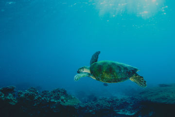 10 fascinating facts about sea turtles