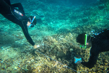 Latest Reef Trust Partnership Progress Update