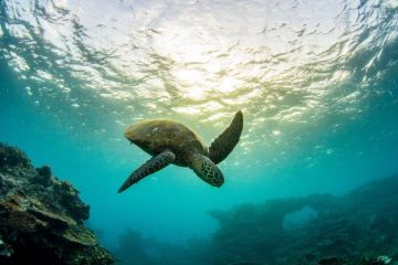 REEFCHAT: Saving our endangered turtles