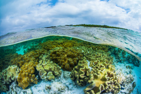 Reef Restoration and Adaptation Science