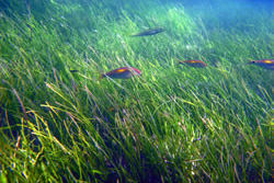 Community Caring for Sea Country: Seagrass