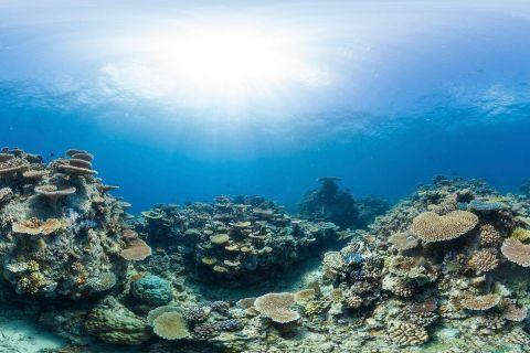 Combining Citizen Science and innovative technologies to enhance reef management