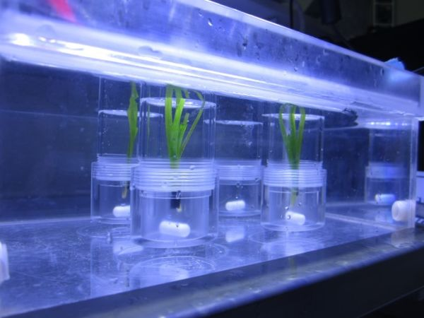 Incubations for photosynthetic measures