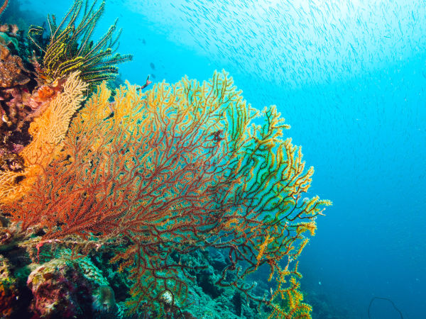 Our Projects Great Barrier Reef Foundation