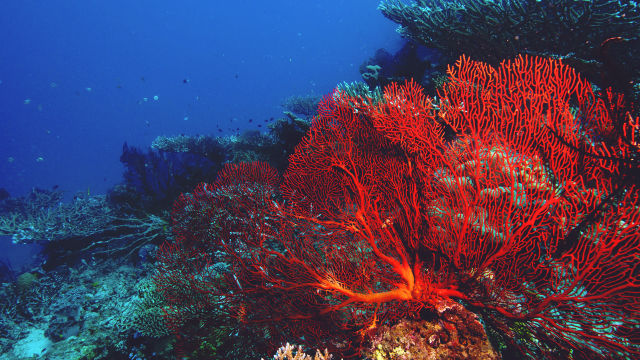 Can our corals recover?