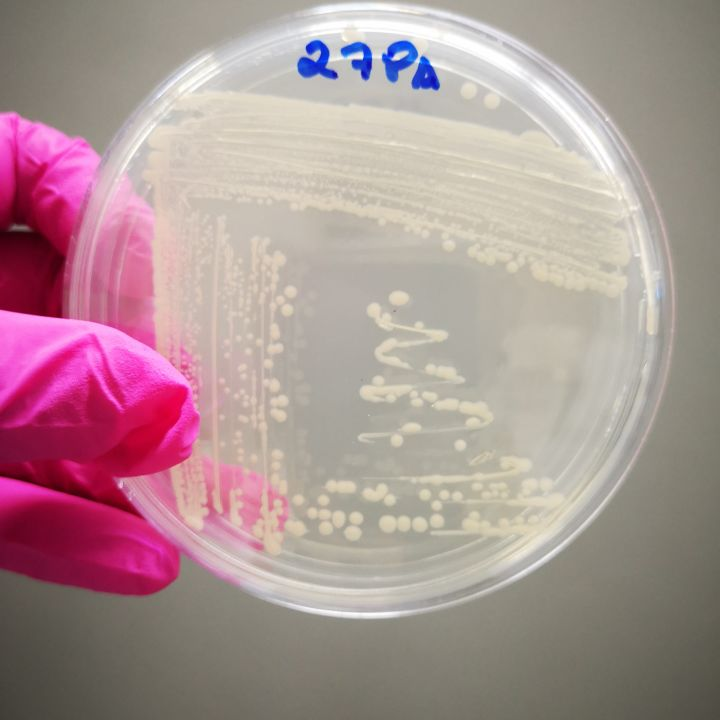 1. Grow beneficial microorganisms