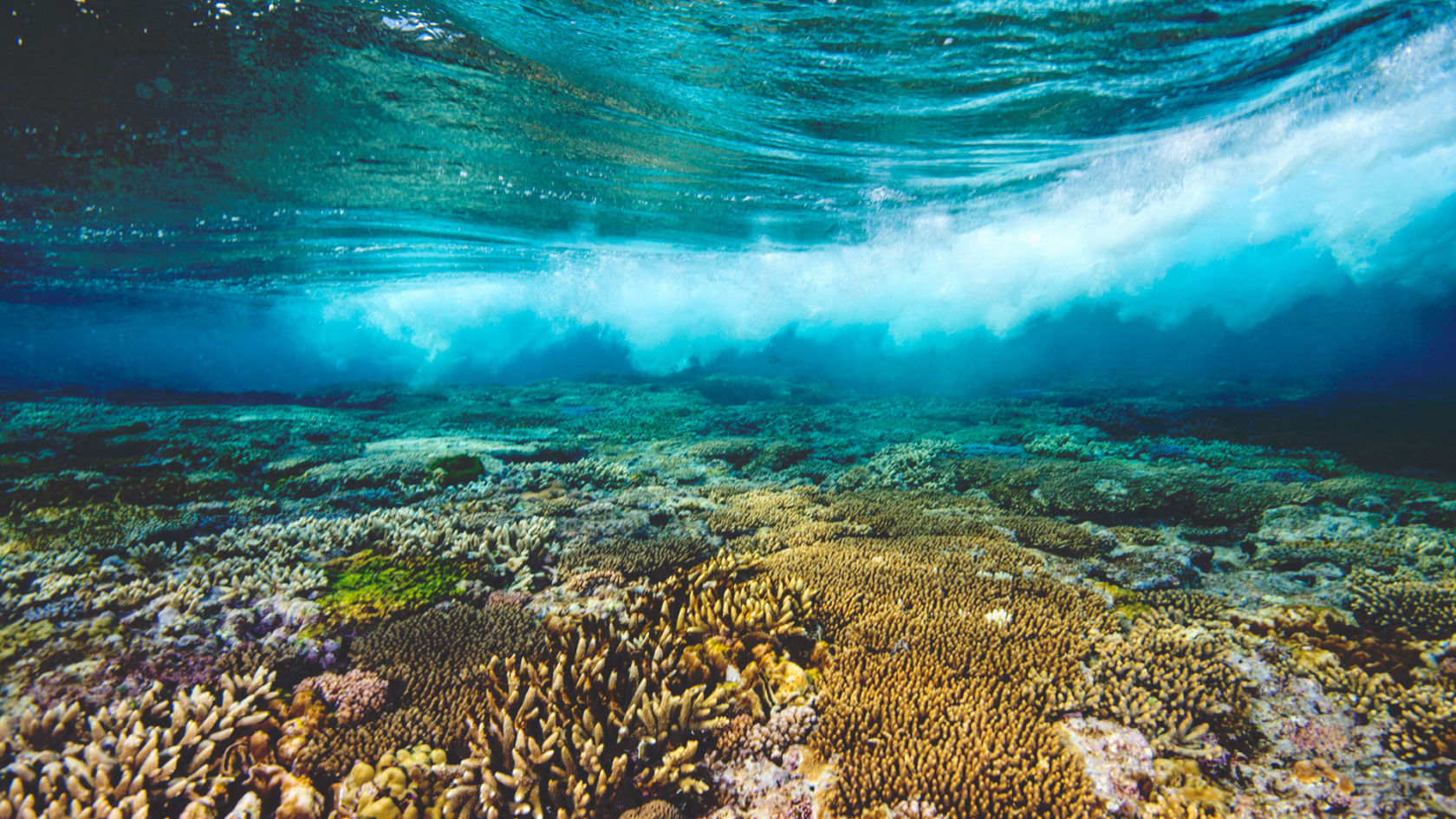 great barrier reef research paper Free great barrier reef papers, essays, and research papers.